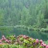 Lago di Barco con Rododendri